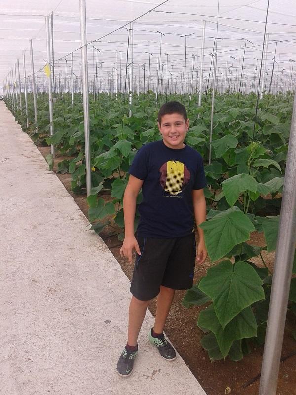 plantacion de pepinos